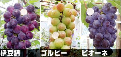 photos01.jpg